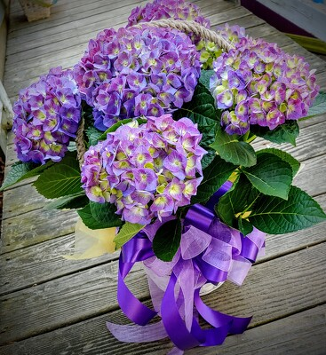 Jersey Shore Hydrangea from Rose Garden Florist in Barnegat, NJ